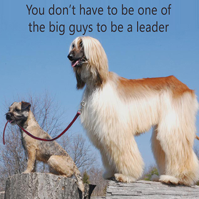 Leadership quote on dog image