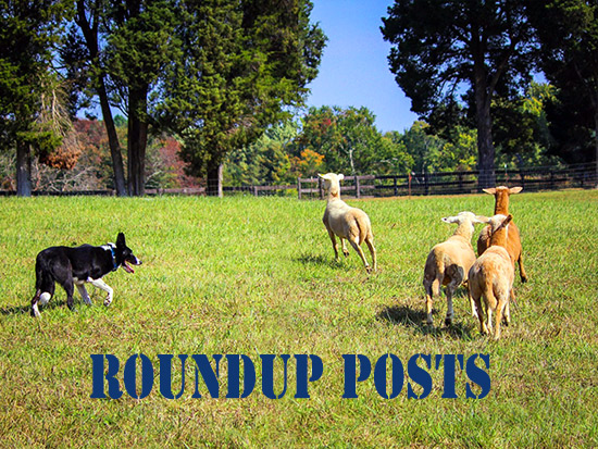 Roundup post featured image sheep dog sheep